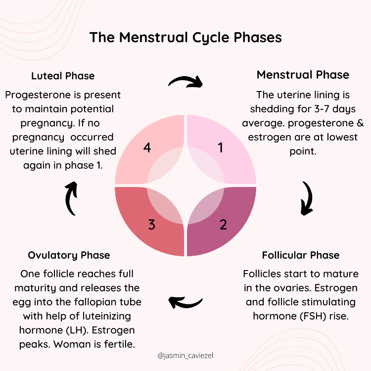Image: Menstrual Cycle Phases