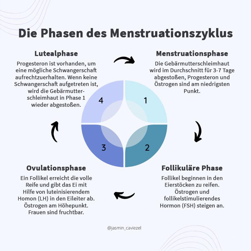 Bild: Phasen Menstruationszyklus